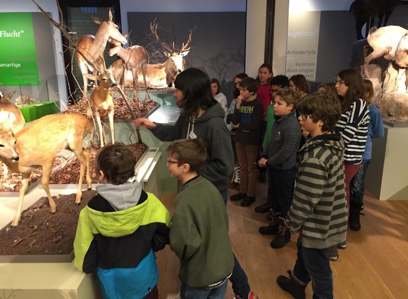 Museum Reh (3)