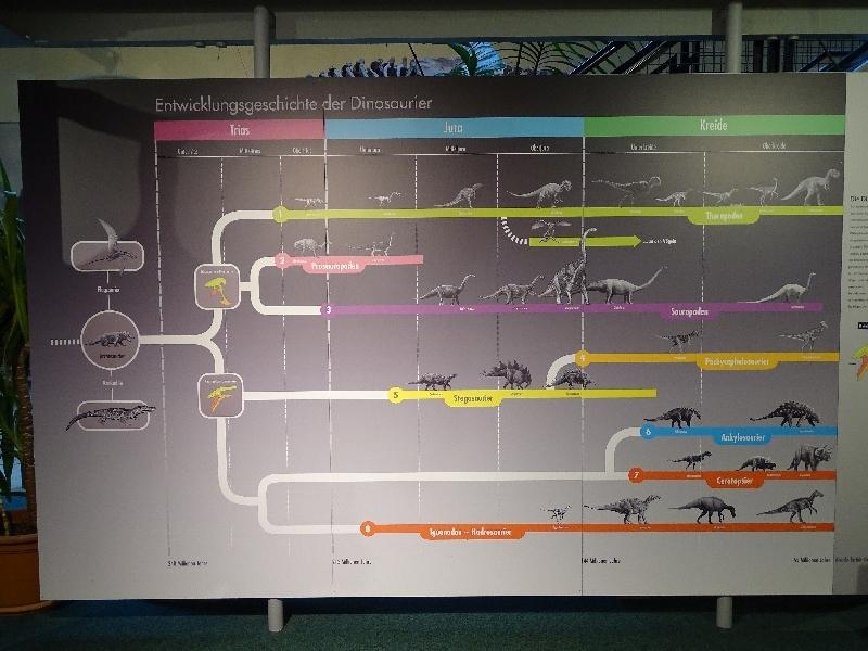 12 Sauriermuseum 2015