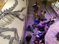 04 Sauriermuseum 2015
