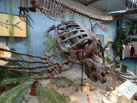 18 Sauriermuseum 2015
